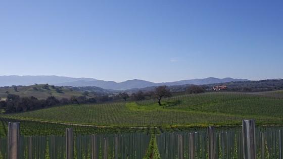 stolpman-organic-wineries-los-olivos.jpg